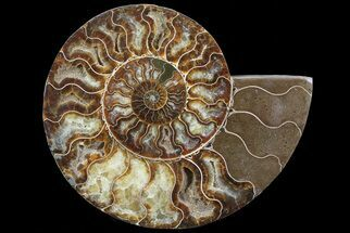 "8.5"" Polished Ammonite Fossil (Half) - Agatized For Sale, #67898"