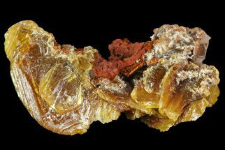 ".9"" Wulfenite Crystals Cluster - Mexico For Sale, #67712"