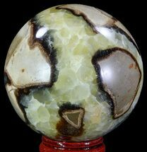 Septarian - Fossils For Sale - #67836