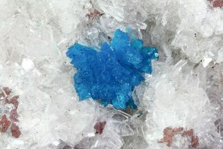 Buy Vibrant Blue Cavansite Cluster on Stilbite - India - #67804