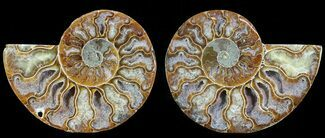 "3"" Polished Ammonite Pair - Agatized For Sale, #68849"