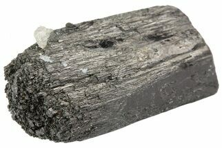 "1.6"" Black Tourmaline (Schorl) Crystal - Namibia For Sale, #69170"