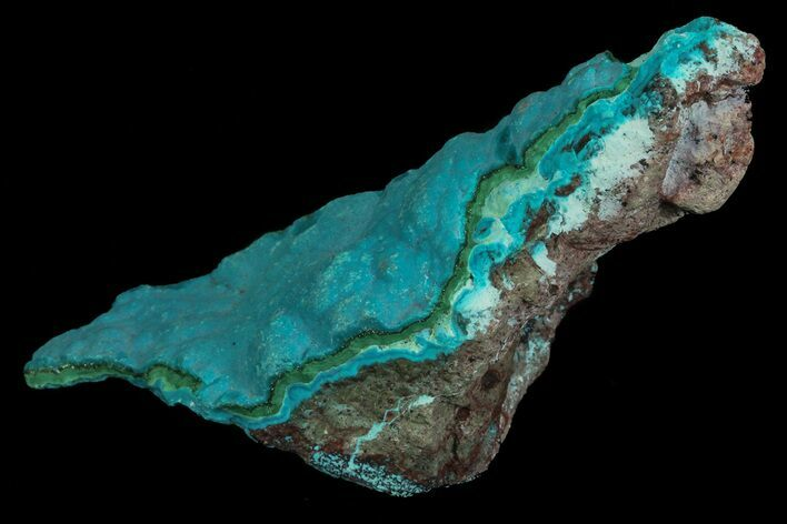"3.6"" Botryoidal Chrysocolla and Malachite - Congo"