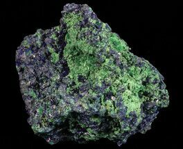 Azurite & Malachite - Fossils For Sale - #69699