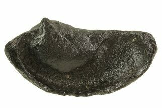 "Buy 3.4"" Fossil Whale Ear Bone - Miocene - #69673"