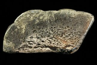 "2.8"" Pyritized, Polished Iguanodon Bone - Isle Of Wight For Sale, #69941"