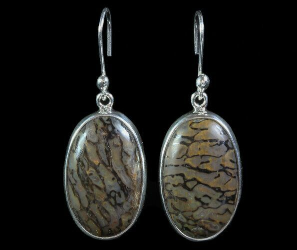 ".95"" Agatized Dinosaur Bone (Gembone) Earrings - Sterling Silver"