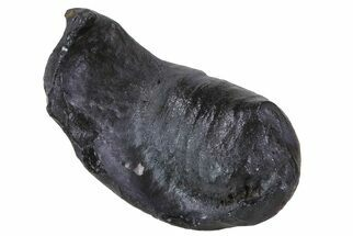 Whale (Unknown Species) - Fossils For Sale - #69678