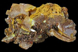"1.6"" Wulfenite Crystals on Matrix - Mexico For Sale, #67727"
