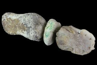 Composite Hadrosaur Finger - Alberta (Disposition #000028-29) For Sale, #71729