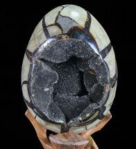 Septarian with Calcite & Barite - Fossils For Sale - #72051