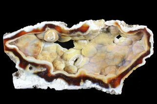 "4"" Unique, Agatized Fossil Coral Geode - Florida For Sale, #72297"