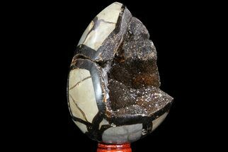 "Buy 4.4"" Septarian ""Dragon Egg"" Geode - Black Crystals - #71995"