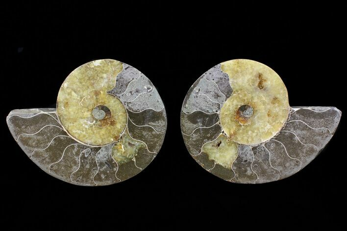 "Bargain, 5.5"" Cut & Polished Ammonite Pair - Agatized"