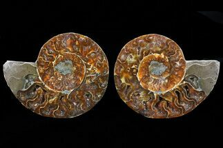 "Buy 4.9"" Cut & Polished Ammonite Pair - Agatized - #73963"