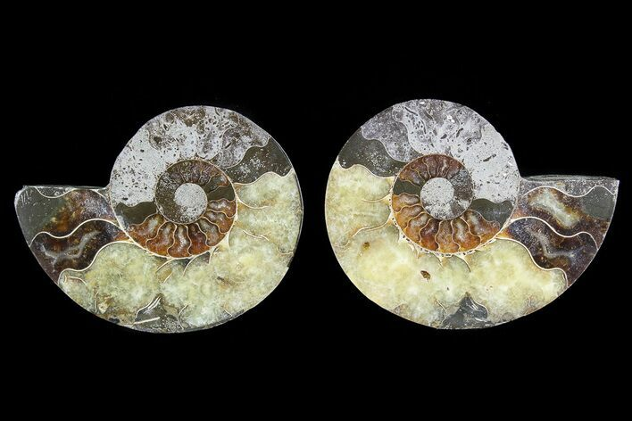 "Bargain, 4.7"" Cut & Polished Ammonite Pair - Agatized"