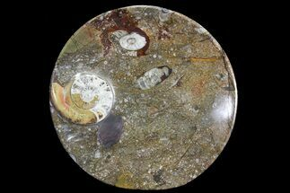 "6.8"" Round Fossil Goniatite Dish For Sale, #73985"