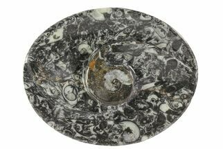 "4.7"" Oval Shaped Fossil Goniatite Dish For Sale, #73751"