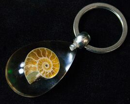 Authentic Fossil Ammonite Keychain - Clear For Sale, #75737