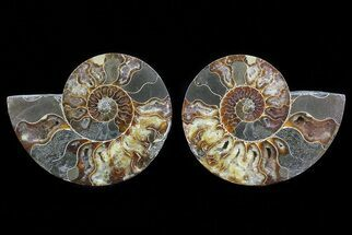 "6.4"" Cut & Polished Ammonite Pair - Agatized For Sale, #72917"