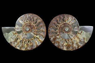 "Buy 6.8"" Cut & Polished Ammonite Pair - Agatized - #72919"
