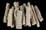 "Wholesale Lot: 1-4"" Fulgurites (""Petrified Lightning"") ~ 200 Pieces - #76035-1"