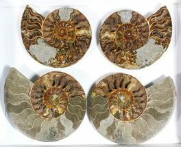 "Buy Wholesale: 6 to 7"" Cut Ammonite Pairs (Grade B/C) - 6 Pairs - #77332"
