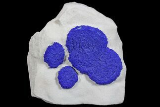 Azurite - Fossils For Sale - #77295
