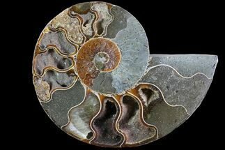 "Bargain, 4"" Polished Ammonite Fossil (Half) - Agatized For Sale, #77414"