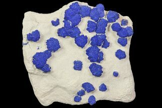 Brilliant Blue Azurite Sun Cluster On Rock - Australia For Sale, #77618