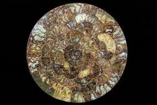 "Buy 12.2"" Composite Plate Of Agatized Ammonite Fossils - #77779"