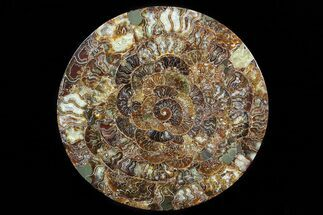 "Buy 12.2"" Composite Plate Of Agatized Ammonite Fossils - #77782"