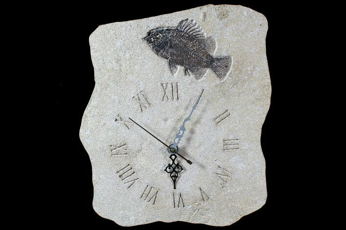 "11.3"" Tall Clock With Cockerellites Fish Fossil - Wyoming"