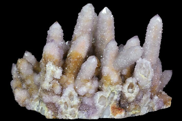 "5.5"" Cactus Quartz (Amethyst) Cluster - South Africa"