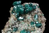 "2.3"" Large, Gemmy Dioptase Crystals On Calcite - Kazakhstan - #78851-4"