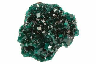 "Buy .95"" Gemmy, Dioptase Crystal Cluster - Namibia - #78694"