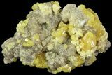 "3.15"" Sparkling Sulfur On Matrix Of Calcite Crystals - Poland - #79236-1"