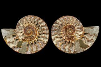 "Buy 6.2"" Cut/Polished Ammonite Pair - Agatized - #79144"
