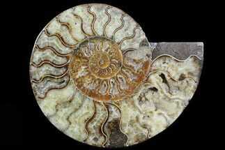 "Buy 8.3"" Cut Ammonite Fossil (Half) - Agatized - #78337"
