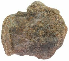 Unidentified Hadrosaur - Fossils For Sale - #78780