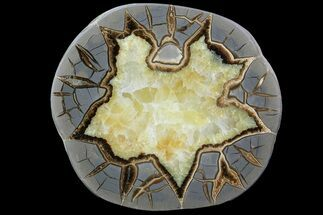 Septarian - Fossils For Sale - #79218