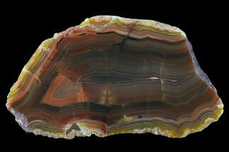 "Buy 3.7"" Beautiful Condor Agate From Argentina - Cut/Polished Face - #79516"