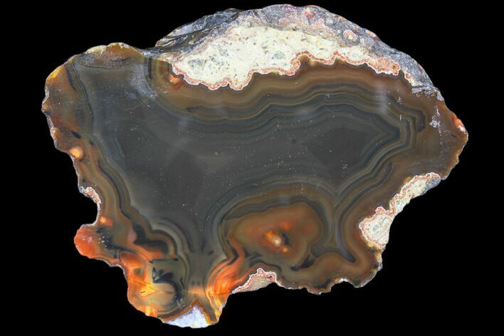 "2.3"" Beautiful Condor Agate From Argentina - Cut/Polished Face"