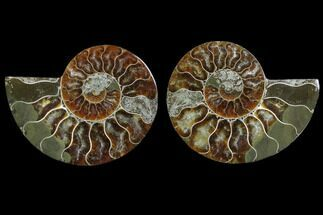 "Buy 2.85"" Cut & Polished Ammonite Fossil - Agatized - #78397"