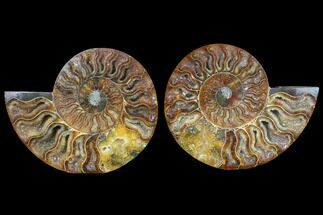 "5"" Cut & Polished Ammonite Pair - Agatized For Sale, #79706"