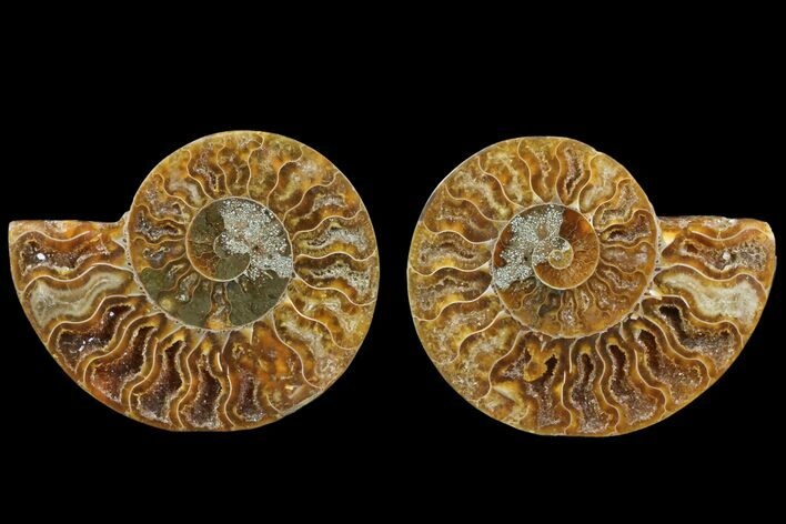 "2.95"" Cut & Polished Ammonite Fossil - Agatized"