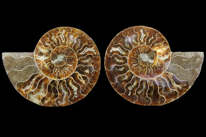 "3.7"" Cut & Polished Ammonite Fossil - Agatized"