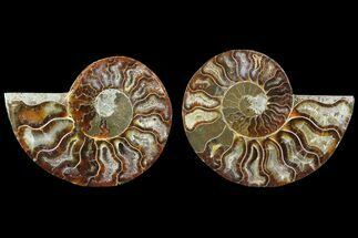 "Buy 3.25"" Cut & Polished Ammonite Fossil - Agatized - #78370"