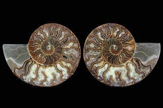 "Buy 4.9"" Cut & Polished Ammonite Fossil - Agatized - #78586"