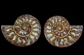 "Buy 3.35"" Cut & Polished Ammonite Fossil - Agatized - #78379"